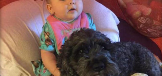 Dog saves baby girl - Ruffing it