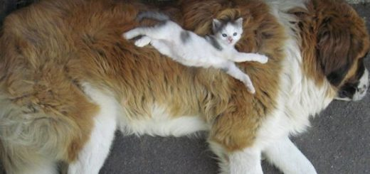 cats sleeping on dogs- Ruffing it