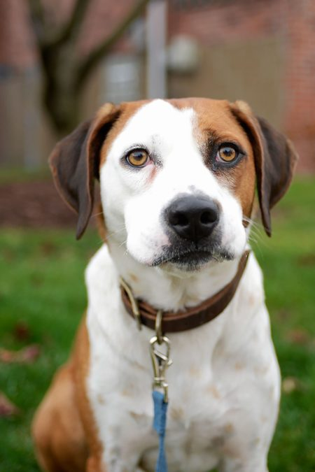 Ned the shelter dog on tv-Ruffing it