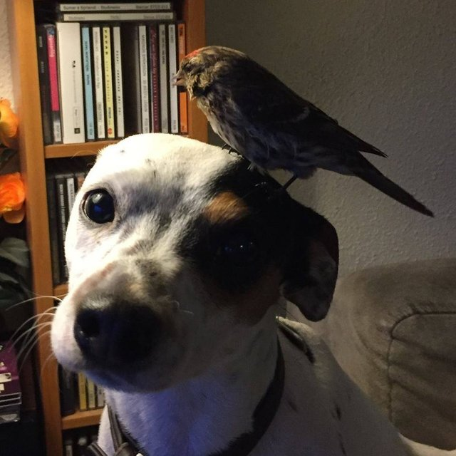 dog saves bird