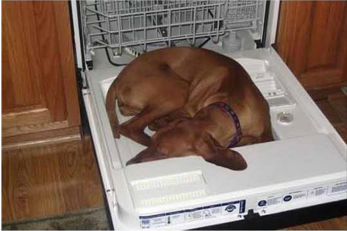dishwasher dog- Ruffing it