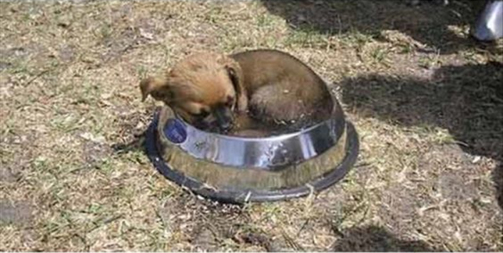 Puppy in a dish - Ruffing it