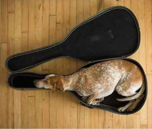 Musically-Sound/asleep - Ruffing it