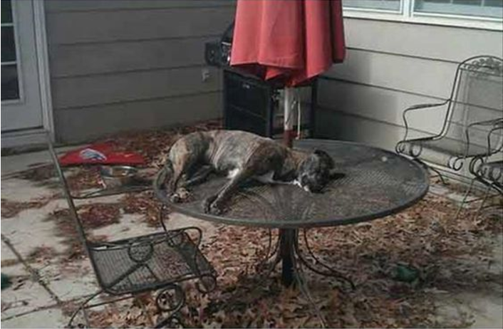 Dog sleeping on a table- Ruffing it