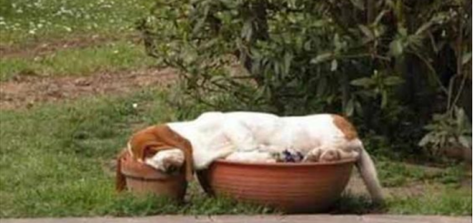 Dog sleeping in a pot- Ruffing it