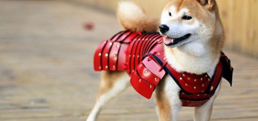 Samurai armor on dogs- Ruffing it