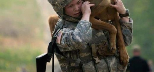 Military dog inspiration- Ruffing it