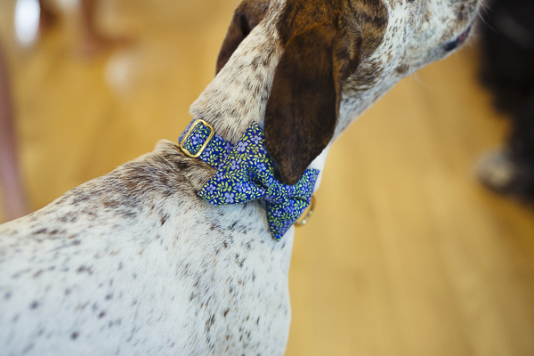 Wedding dog wearing floral blue, green bow tie