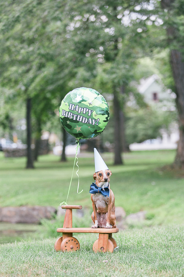 dog pawty-rescued chi 6th birthday photo shoot