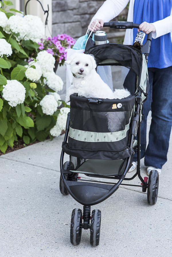 dog in pet stroller, benefits of pet strollers for healthy dogs